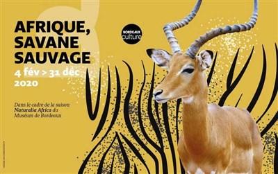 Une saison en Afrique au Musée d'histoire naturelle de Bordeaux